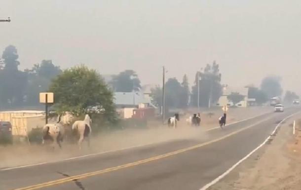 США охопили масштабні лісові пожежі