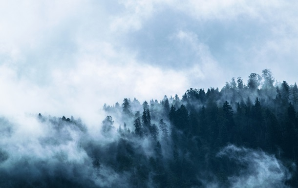 Масштабные леса мира стали очень опасными