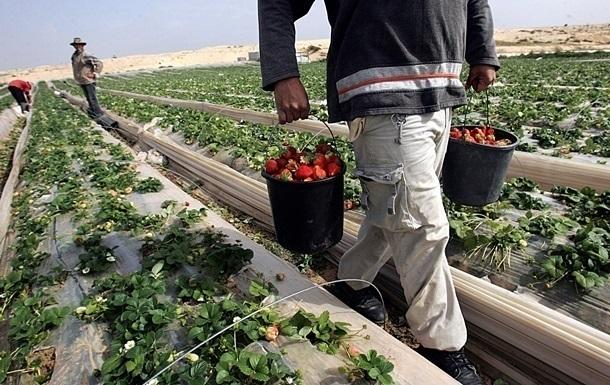 Фермеры в Латвии терпят убытки из-за нехватки украинских заробитчан