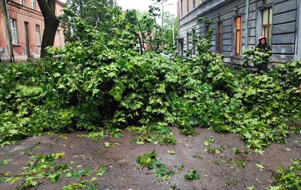 Под Киевом два человека погибли при падении деревьев