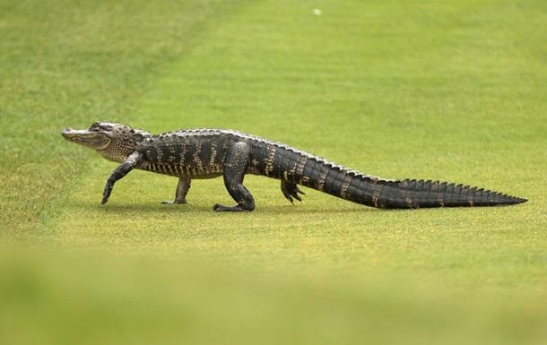 Житель Флориды украл аллигатора и пытался `преподать ему урок`