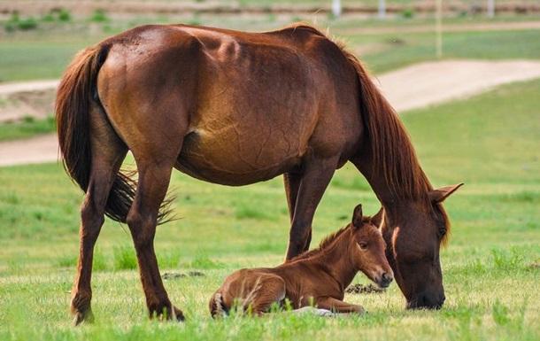 Во Львовской области лошадь откусила пятилетнему ребенку щеку