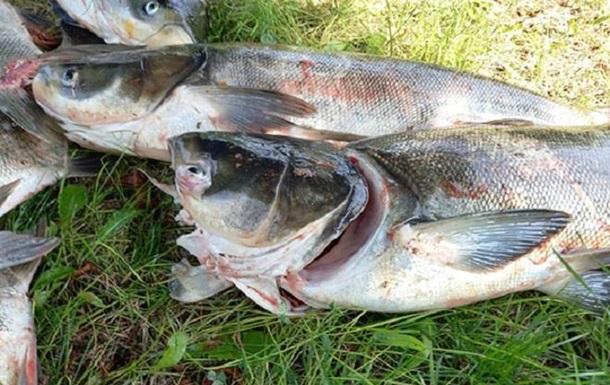 Возле ДнепроГЭСа рыбаки собирают погибшую рыбу