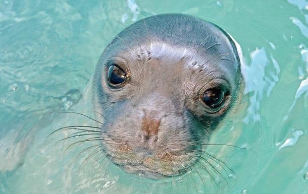 В Греции убили знаменитого тюленя-талисмана
