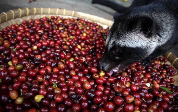 Кофе рекордно дорожает. Вскоре он может исчезнуть
