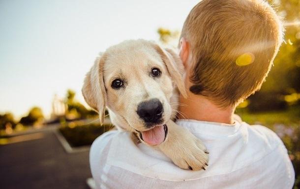 Собаки здатні визначати брехню - вчені