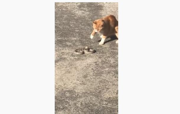 В Херсоне кот убил змею