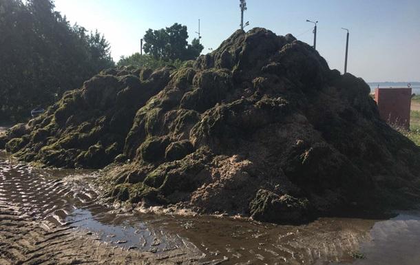 Пляжі Бердянська завалило тоннами водоростей