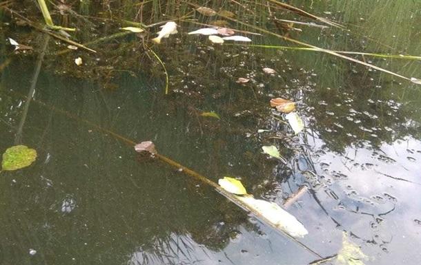 У Черкаській області загинула риба в річці Рось