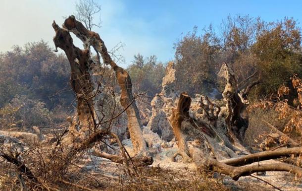 У Греції згоріло 2500-річне дерево