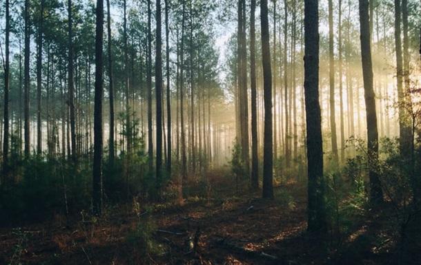В Україні планують вирощувати  промисловий  ліс