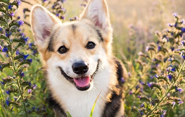 Який ти власник собаки? Проходь тест та отримуй подарунок