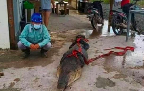 Китайським робітникам в Індонезії світить в язниця за з їденого крокодила