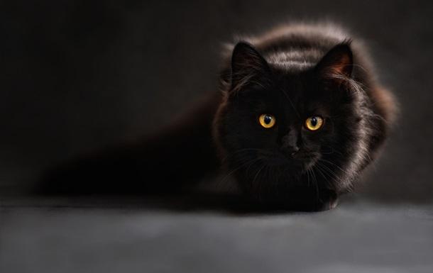 В Нидерландах кот прожил без еды почти два месяца