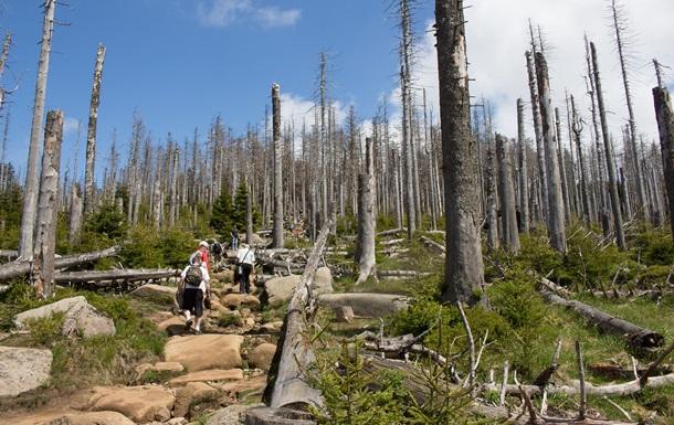 Діяльність людини може знищити третину дерев Землі