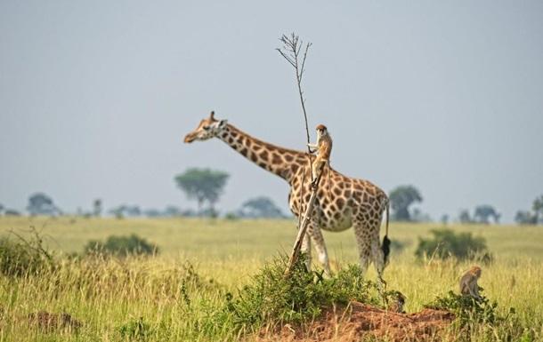 Comedy Wildlife Photography Awards показала найсмішніші фото тварин