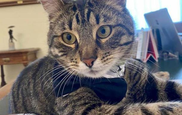 У Львові шукають кота Левчика, який живе у міськраді