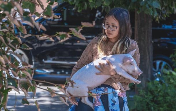 В Днепре иностранка живет в квартире со свиньей и теленком