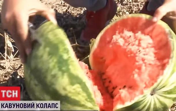 Фермери в Херсонській області знищують кавуни
