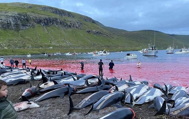 Кровавая вода: на Фарерских островах за ночь убили 1500 дельфинов