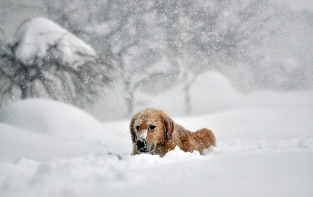 Синоптик рассказал, как будут меняться зимы в Украине