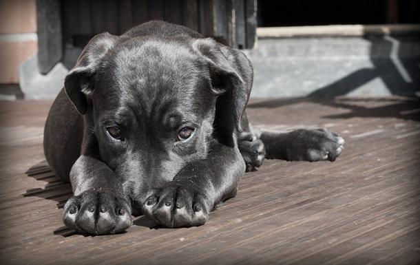 В Бразилии суд позволил собакам претендовать на моральную компенсацию