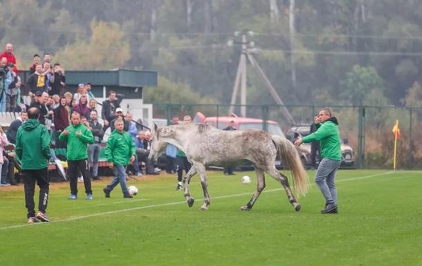 Полтавские животные пытались сорвать матч дефлимпийцев