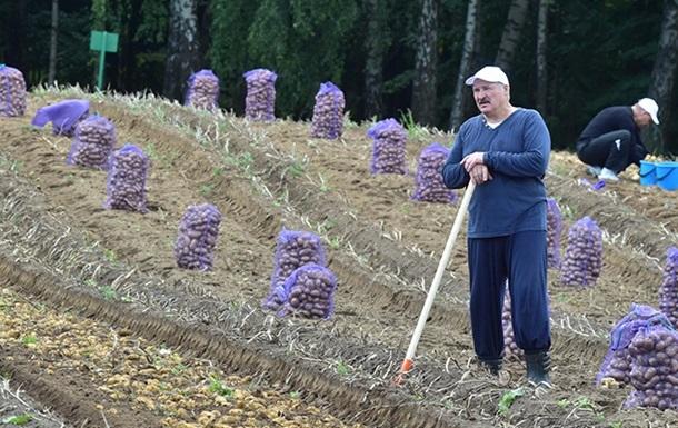 Білорусь уперше почала імпортувати картоплю