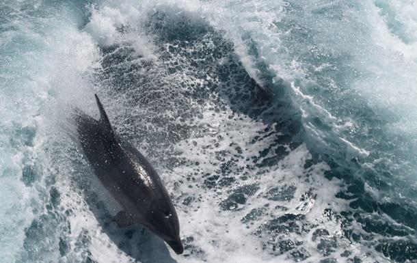 На берег Азовського моря викинуло мертвих дельфінів