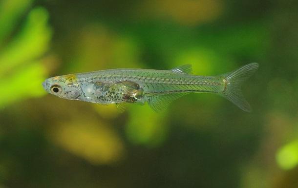 Ученые открыли новый вид рыб с крошечным мозгом