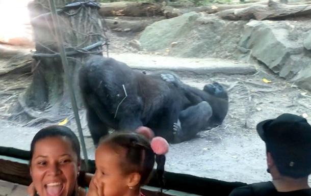 У США горили зайнялися оральним сексом на очах у відвідувачів зоопарку
