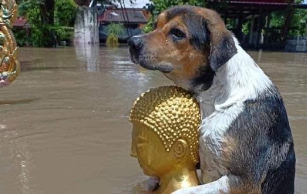 Таиланд страдает от наводнений