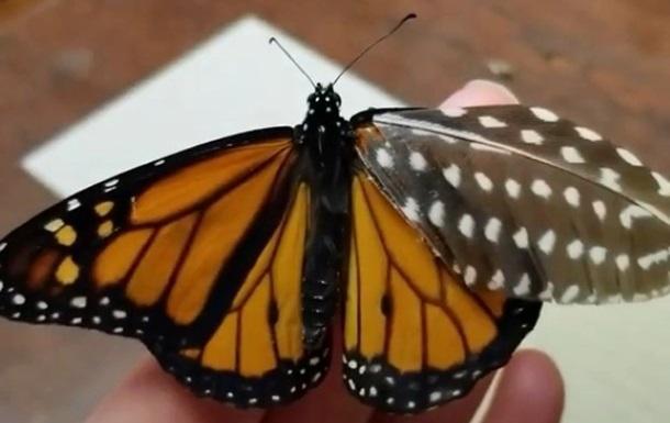 Американка створила для пораненого метелика `протез`