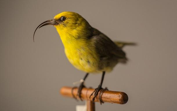 У США оголосили вимерлими 23 види істот
