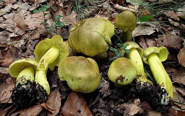У Кіровоградській області після отруєння грибами померли двоє людей