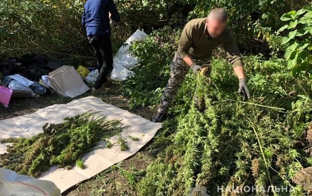 У Сумській області виявили плантацію конопель