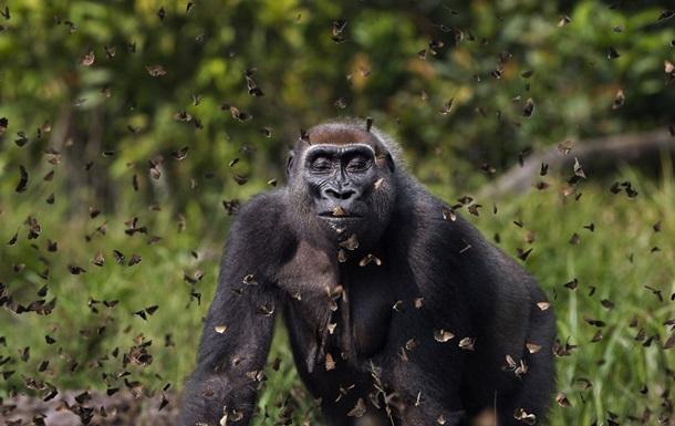 Названы победители фотоконкурса Nature Conservancy