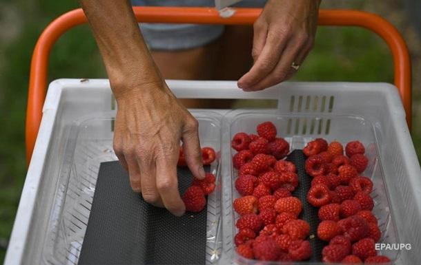 Украина впервые импортировала малину в США и Канаду