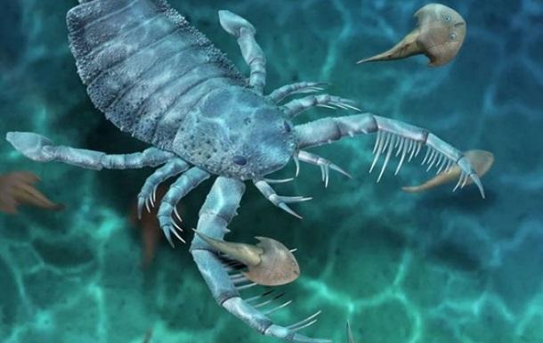 Найдены окаменелости древнейшего ракоскорпиона