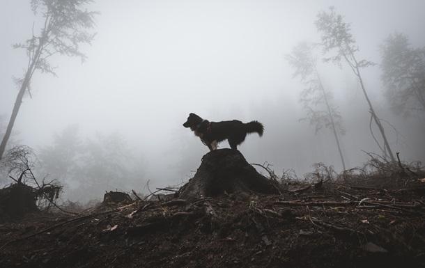 Из-за бешеного пса часть города на Прикарпатье закрыли на карантин