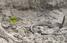 Хіт Мережі: маленька пташка випатрала живу змію