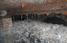 У каналізації плавав 64-метровий жировий  монстр